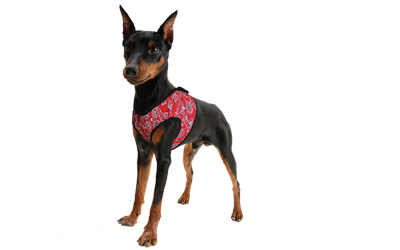 Aqua Coolkeeper Cooling Comfy Hundegeschirr, red western