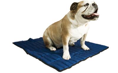 Für Hunde jeder Größe geeignet