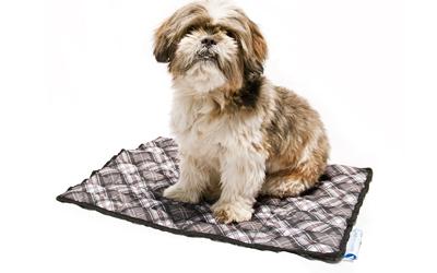 Sommerprodukt für Hunde jeden Alters