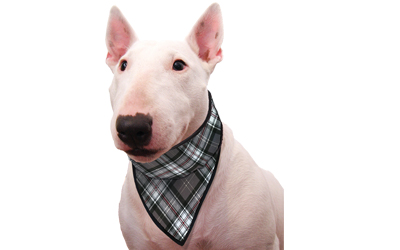 Aqua Coolkeeper Cooling Hunde Bandana, scottish grey