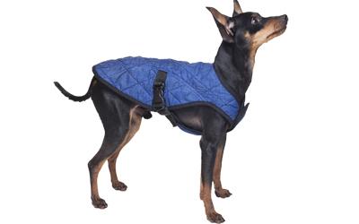 Aqua KeepCooler auch für kleine Hunde einsetzbar