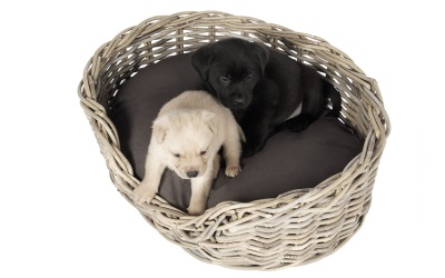 51DN Rattan Hundekorb oval 10Year inklusive Kissen