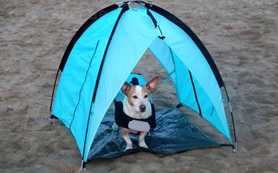 Farblich passend blaues alcott Hundezelt