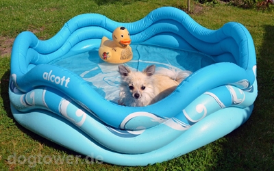 Ideale Abkühlung für kleine und mittegroße Hunde