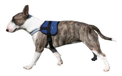 Aqua Coolkeeper Cooling Survival Harness kühlendes Hundegeschirr, Pacific Blue