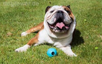 Auch für Hund mit kräftigen Kiefer geeignet