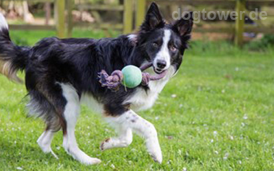 Kombination aus Ball und robuster Kordel