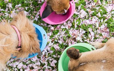 Erhältlich in drei Größen für kleine und große Hunde