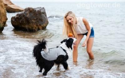 Ideale Sommerbekleidung für Hunde