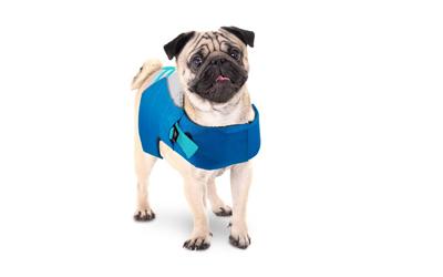 Auch für Hunde mit starkem Brustkorb geeignet