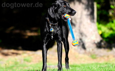 Apportierspielzeug für kleine und große Hunde