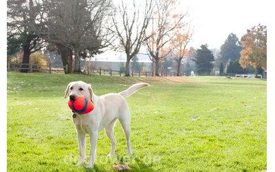 Hundespielzeug zum Apportieren u.v.m.