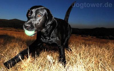 Sehr stark leuchtender Hundeball von Chuckit