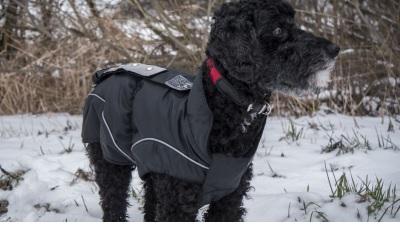 DogBite Leucht-Winterjacke LED, schwarz