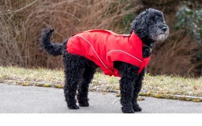 DogBite Winterjacke, rot