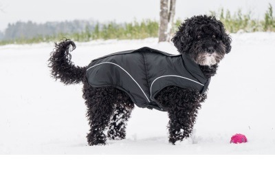 DogBite Winterjacke, schwarz