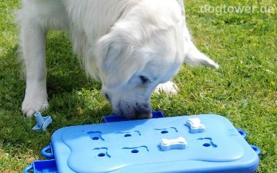Dog Casino Plastik