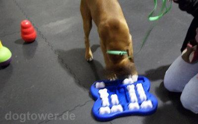 Dog Finder im Test