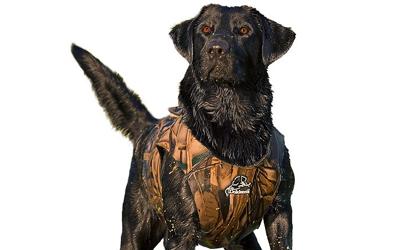 Dokken Neoprenweste für Hunde, camouflage