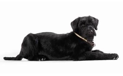 Reflektierendes Hundehalsband