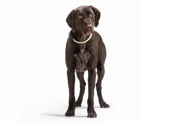 Hunter Rund- Hundehalsband