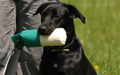 Zweifarbiger Hundedummy