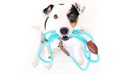 Stabile Rundleine für den Hundealltag
