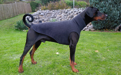 IQO Hundepullover P1, anthrazit