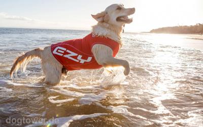 Hundeshirt - ultraleicht und schnelltrocknend