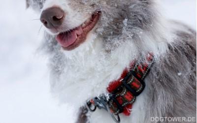 Hurtta Hundehalsband, rot