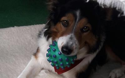 Hunde- Quietschball