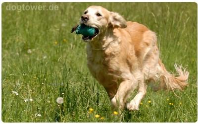Hundedummy Ball, Apportierspielzeug