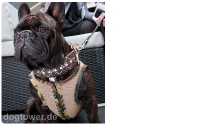 Hundegeschirr für Bullys