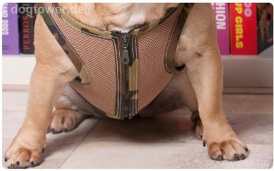 Hundegeschirr camo
