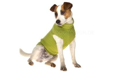 Hundepullover grün