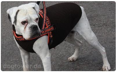 Hundepullover IQO Classic braun