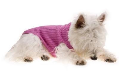 Wollpullover für Hunde