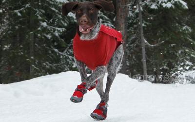 Hundeschuhe Polar Trex, beim Laufen