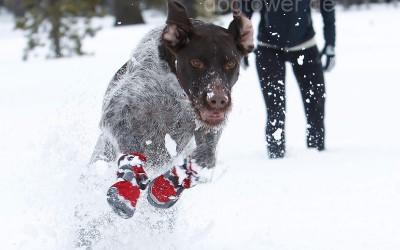 Hundeschuhe Polar Trex, Einsatz im Schnee