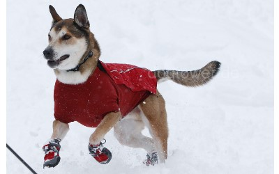 Hundeschuhe Polar Trex in Kombination mit Weste