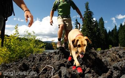 Hundeschuhe für Wanderungen