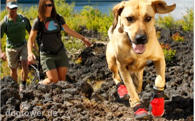 Ruffwear For Dogs on the Go