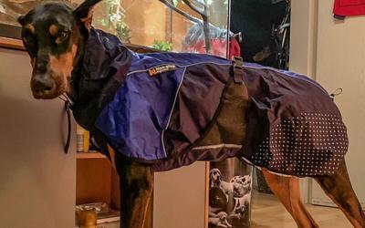 Non Stop Dogwear Beta Pro Raincoat Hundemantel, blue
