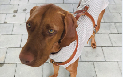 IQO Hundepullover 100% Merinowolle, cappuccino