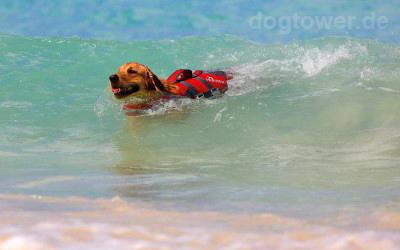 Hunter Hundeschwimmweste für Hunde bis 25kg einsetzbar