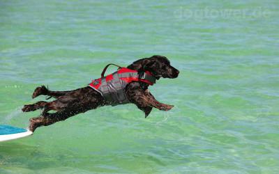 Optimaler Auftrieb für langanhaltenden Schwimmspaß