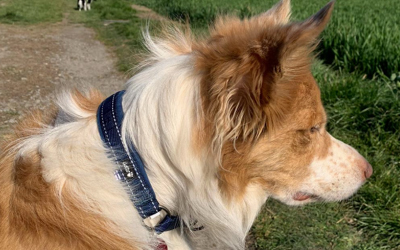 Hurtta Casual Half Choke Hundehalsband, fluss