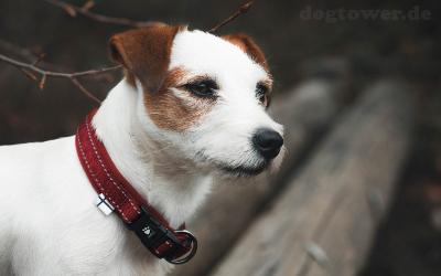 Hurtta Casual Hundehalsband mit Neoprenpolsterung