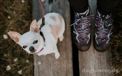 Druch erhältliche Größen für sehr kleine und sehr große Hunde einsetzbar