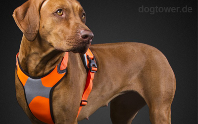 Dazzle Hundegeschirr in neonorange